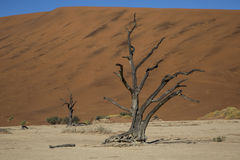 Panorama i Namibia Royaltyfri Fotografi