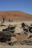 Panorama i Namibia Royaltyfri Bild