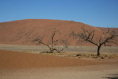 Panorama i Namibia Fotografering för Bildbyråer