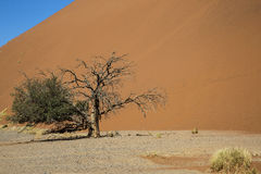 Panorama i Namibia Arkivbilder