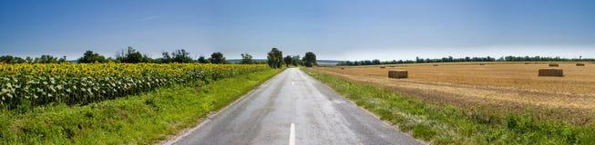 Panorama - il raccolto e giacimento del girasole con le balle della paglia Immagine Stock Libera da Diritti