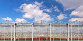 Panorama image of a greenhouse with flowers inside Royalty Free Stock Image