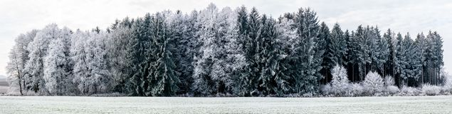 Panorama image of winter landscape with focus on forest royalty free stock image
