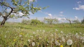Panorama industrial floreciente del jardín del manzano Timelapse 4K metrajes