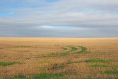 Panorama inglês do país em Salisbúria imagens de stock royalty free