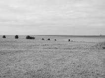Panorama inglês do país em Salisbúria em preto e branco imagens de stock royalty free