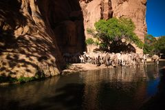Panorama inside canyon aka guelta Bashikele with camels in East Ennedi, Chad royalty free stock photos