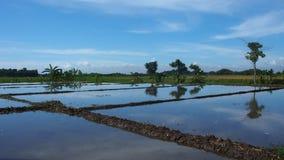 Panorama of Irrigated Paddy Field. Panorama of irrigated (watered) rice paddy field in Java, Indonesia Royalty Free Stock Photos