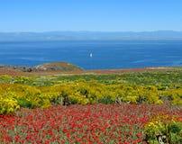 Panorama, isla de Anacapa Fotos de archivo