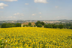 Panorama of Jesi (Marches, Italy) and sunflowers Stock Images
