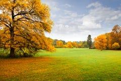 Panorama. Jesień osamotniony piękny drzewo. Jesień. Obraz Royalty Free