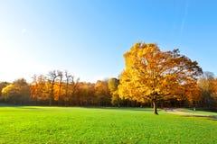 Panorama. Jesień osamotniony piękny drzewo. Krajobraz. Fotografia Royalty Free