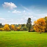 Panorama. Jesień piękni drzewa. Jesień. Obrazy Royalty Free