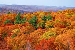 Panorama jesieni ulistnienie w niedźwiadkowej górze Fotografia Royalty Free
