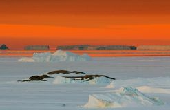 Unrepeatable panorama and just air .On ice floes, terrain and scenery Antarctic .Sunrise. Panorama and just air .On ice floes, terrain and scenery Antarctic stock image