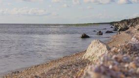 Panorama 4k Florida S.U.A. di tramonto della spiaggia del lago seashell stock footage