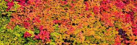 Panorama, kleurrijke de herfstbladeren royalty-vrije stock afbeelding