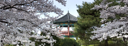 Panorama of a Korean pavilion. A panoramic image of a Korean pavilion partly hidden behind blossoming trees Stock Photography