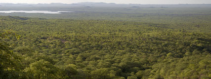 Panorama of Kunene landscape with forest, borderline between Ang Stock Photography