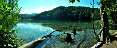 Panorama of lake with fallen tree Royalty Free Stock Photo