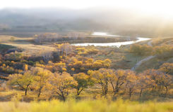 Panorama of lake and forest  in valley Stock Photography