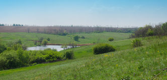 Panorama of the lake. Among green meadow in spring Royalty Free Stock Images