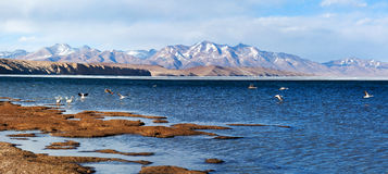 Panorama of Lake Manasarovar in Western Tibet Stock Photography