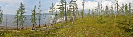 Panorama. Lake in the Putorana plateau. Stock Image