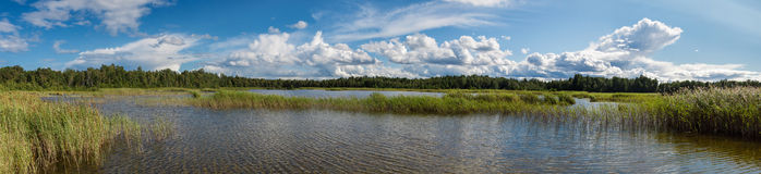 Panorama of the lake. Royalty Free Stock Images