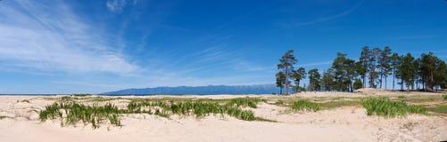 Panorama lakeshore z białym piaskiem i wiecznozielonymi sosnami zdjęcie stock