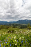 Panorama landscape in Bavaria with alps mountains and meadow at spring. Landscape in Bavaria with alps mountains and meadow at spring Stock Image