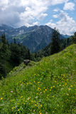 Panorama landscape in Bavaria with alps mountains and meadow at spring. Landscape in Bavaria with alps mountains and meadow at spring Royalty Free Stock Photography