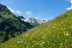 Panorama landscape in Bavaria with alps mountains and meadow at spring. Landscape in Bavaria with alps mountains and meadow at spring Royalty Free Stock Photo