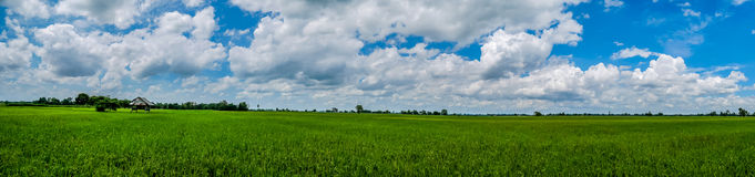 Panorama Landscape. Hut and lush green fields jasmine rice. royalty free stock image