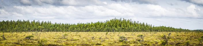 Panorama landscape of a prairie royalty free stock images