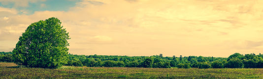 Panorama landscape with a tree Royalty Free Stock Photos