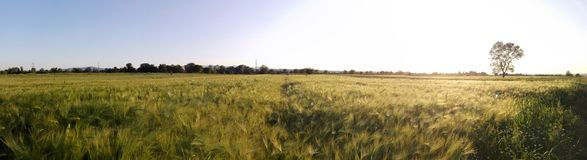 Panorama- landskap Arkivbild