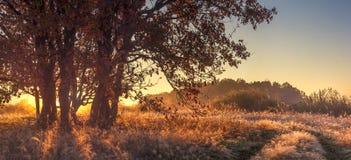 Panorama- landskap av den oktober för höstnatur utom fara morgonen Stort träd på guld- gräs i solljus Kulle och sjö arkivbild