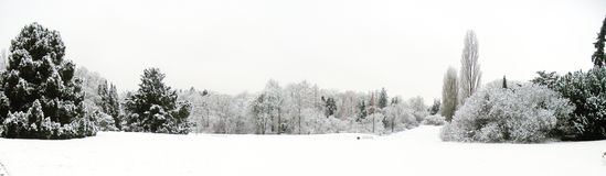 Panorama- landskap av snö och träd royaltyfri foto