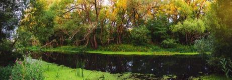 Panorama- landskap för fridfull sommar med den lilla skogfloden på soluppgång arkivbilder