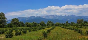 Panorama landskape in Azerbaijan Gabala distrikt. Royalty Free Stock Images