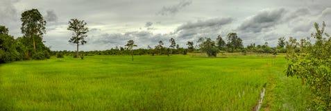 Panorama- landskaprisfält Arkivbild