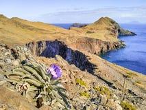Panorama- landskapsikt av en ostkust av madeiraön med blomman fotografering för bildbyråer