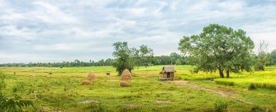Panorama lantligt landskap, sydostligt asiatiskt land med fält, arkivbilder