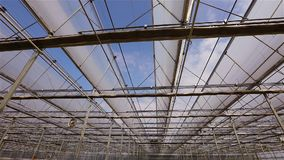 Large bright greenhouse with a transparent roof and blooming flowers stock video