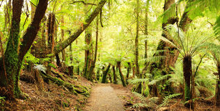 panorama lasów deszczowych Obraz Stock