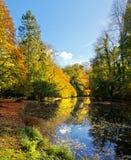 Panorama lasowy jezioro w jesieni. Fotografia Royalty Free