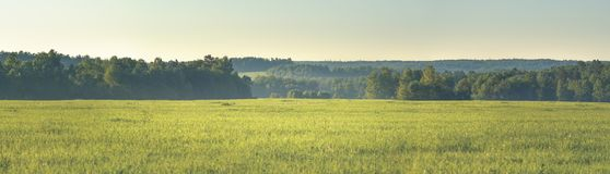 Panorama lat pola i las Zdjęcia Stock