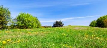 Panorama lato łąka z zieloną trawą, drzewami i niebieskim niebem, Fotografia Stock
