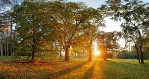 Panorama lato - jesieni drzewo w lasu parku Zdjęcie Stock